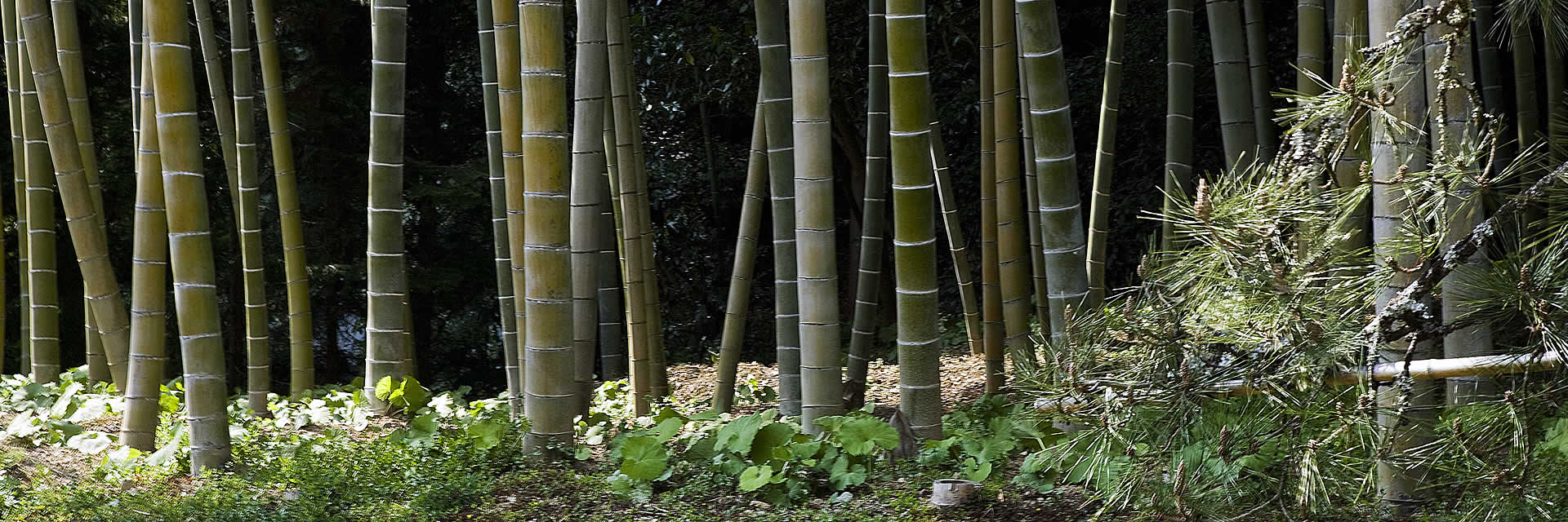 holly-forsyth-bamboo-forest