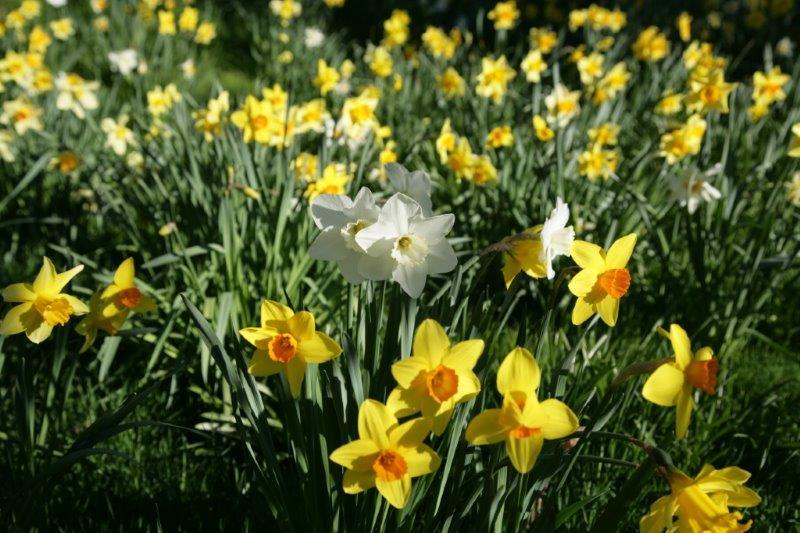 10-Spring bulbs