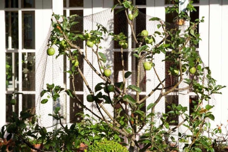 13-apples netted