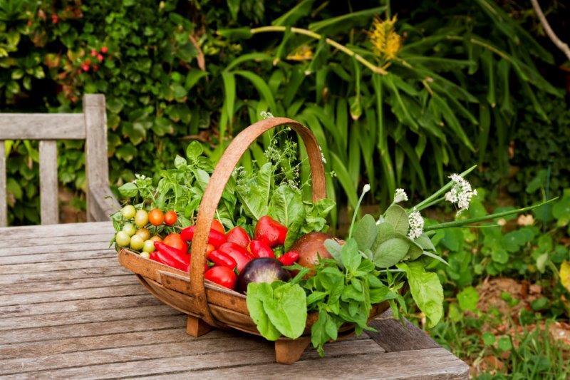 5-vegetable bounty FNL